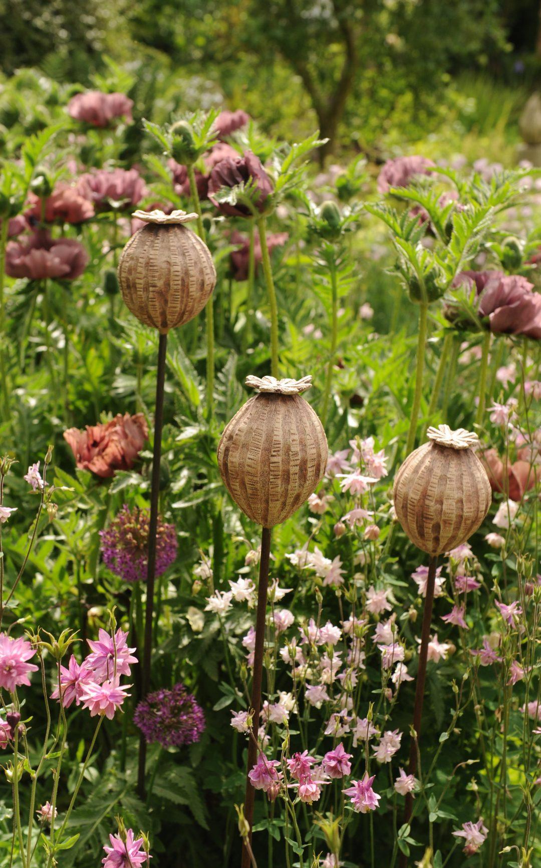 3 pink seedheads